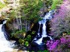 滝壺のミツバツツジ/撮影:玄梅様