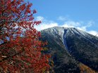 冠雪の男体山とマユミ(真弓)