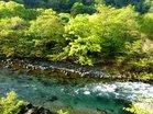 新緑の大谷川