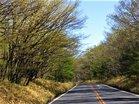 芽吹き始めたミズナラ林国道120号ロマンチック街道