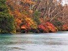 兎島の紅葉
