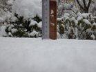 最大積雪19.5cm