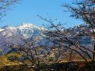 4月の女峰山と桜